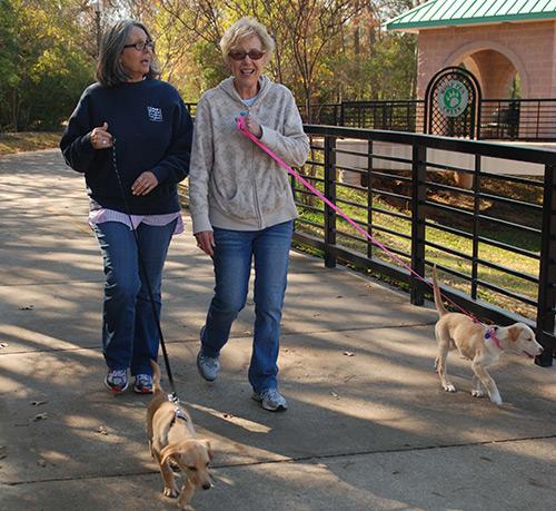 Ladies Walking Dogs