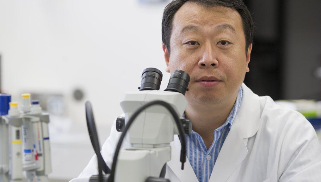 Dr. Xiaofang Wang research on FAM20B gene