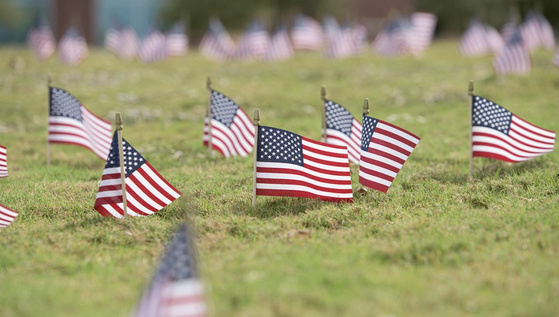 American flags planted in the grass