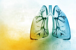 lungs in watercolor