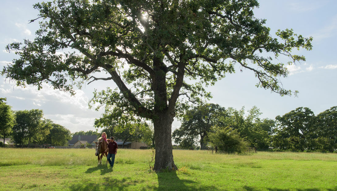 Man and girl walk next to a large tree